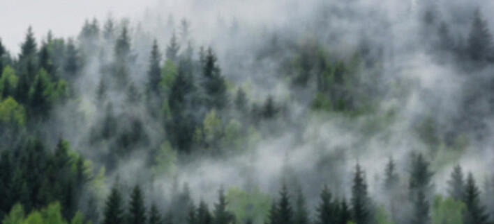 forest_blur3